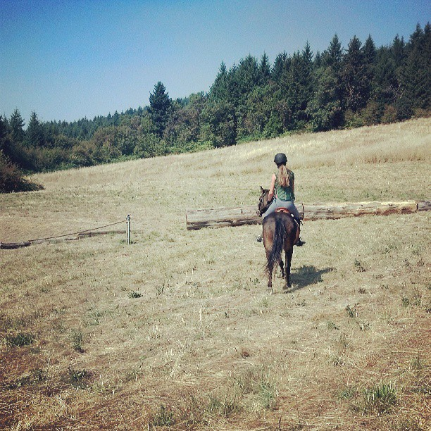 Schooling Sophie. #horses